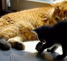 Frank and Farley...Friends, Almost... by Tracy Faught