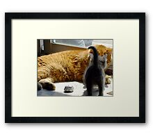 Frank and Farley Framed Print