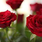 Roses by Sandra Johansson