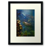 USA. Massachusetts. Boston. Aquarium. Framed Print
