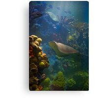 USA. Massachusetts. Boston. Aquarium. Canvas Print