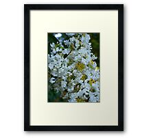 Beautiful White Flowers in Garden Framed Print