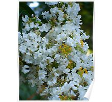 Beautiful White Flowers in Garden Poster