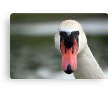 Head-on Swan Canvas Print