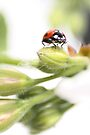Bud Bug by missmoneypenny