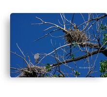 Baby Redtail in upper nest and Blue Heron in lower Canvas Print