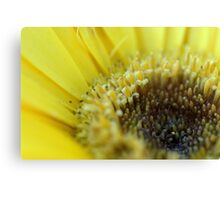 Up Close and in your Face.................. Canvas Print