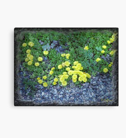 Rock Plants Canvas Print