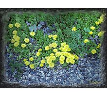 Rock Plants Photographic Print