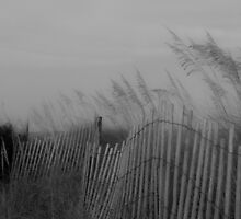 Fence Curving Through Dune by Andy Whitfield
