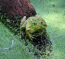 Froggie by Paulette1021