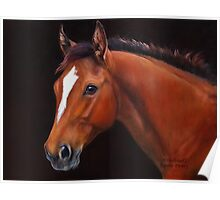 Thoroughbred Foal  Poster