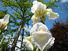 Irises Flowers White Green Botanical Trees Baslee Troutman by BasleeArtPrints