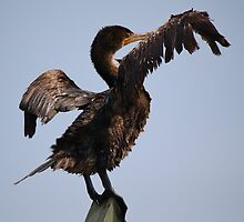 Cormorant Looks like he is Hailing a Taxi by Paulette1021