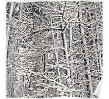 Winter Lacework Poster