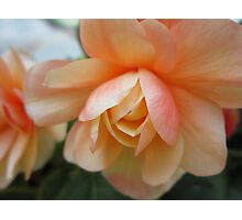 Pale Orange Floral Photographic Print