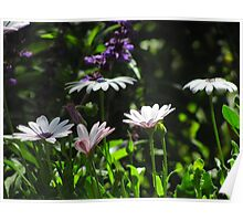 """White 'n Purple Flowers"" Poster"