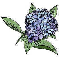 Hydrangea Blue by raymondwarenyc