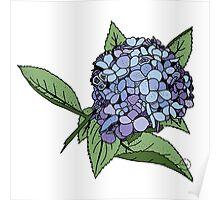 Hydrangea Blue Poster