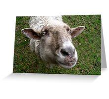 Ben a Good Sheep. Greeting Card