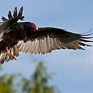Vulture Descent by Martin Smart