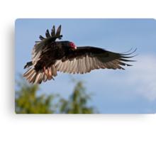 Vulture Descent Canvas Print