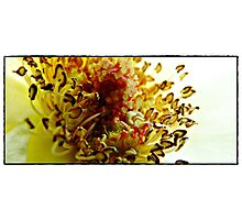 Guts Of A Flower Photographic Print