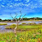 Salt Marsh by Tammy Wetzel