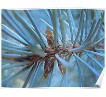 Pine Needle Medley- Utah Poster