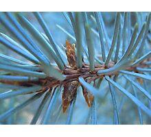 Pine Needle Medley- Utah Photographic Print