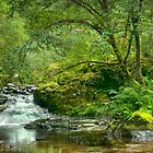 Creek in Mapleton, Oregon, USA by franceshelen