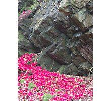 Portmeirion Rock Face Photographic Print