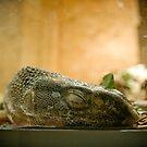 Lullaby, little lizard.  by rhysharper