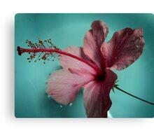 gumamela float Canvas Print