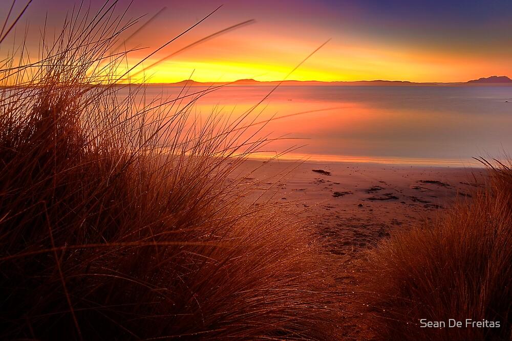 Tussocks - Jubilee Beach, Swansea, Tasmania (HDR) by PC1134