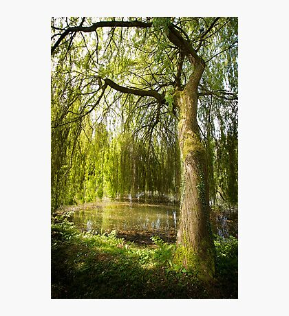 The Willow Tree Photographic Print