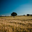 Tree in Wheat field by Matt Sillence