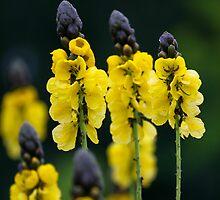 Dragon flowers by torishaa