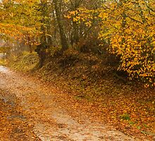 Autumn colors in a path within the woods. by yiannismantas