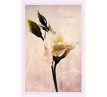Elegance Photographic Print