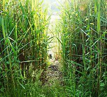 The Beaten Path by Jessica Liatys