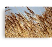 Tall Grass.. Canvas Print