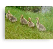 5 little Soldiers,Marching Along...Goslings Metal Print