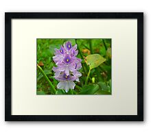 Pocket full of Posies Framed Print