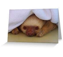Look what's under the blanket Greeting Card