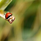 --- lady bug and rain droplets ... by Gregoria  Gregoriou Crowe