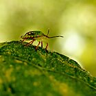 --- out on a leaf ... by Gregoria  Gregoriou Crowe