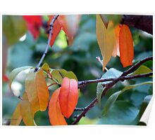 The autumn leaves of a peach tree Poster