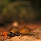 Snails by Jacki Campany