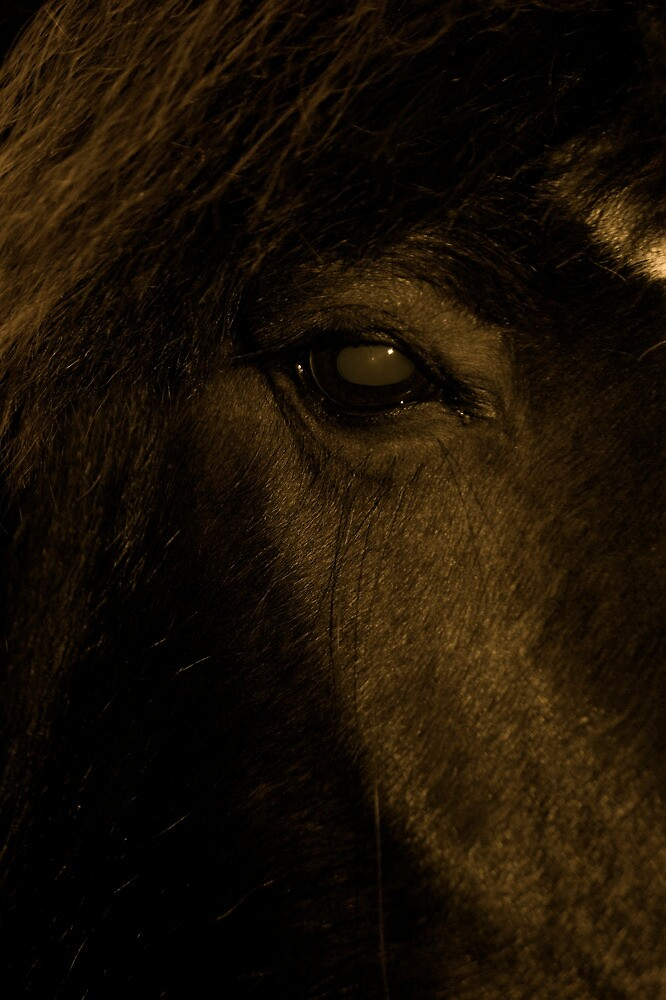 The Eye Of The Horse by Lou Wilson